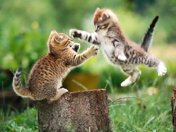Fighting_kittens-1340